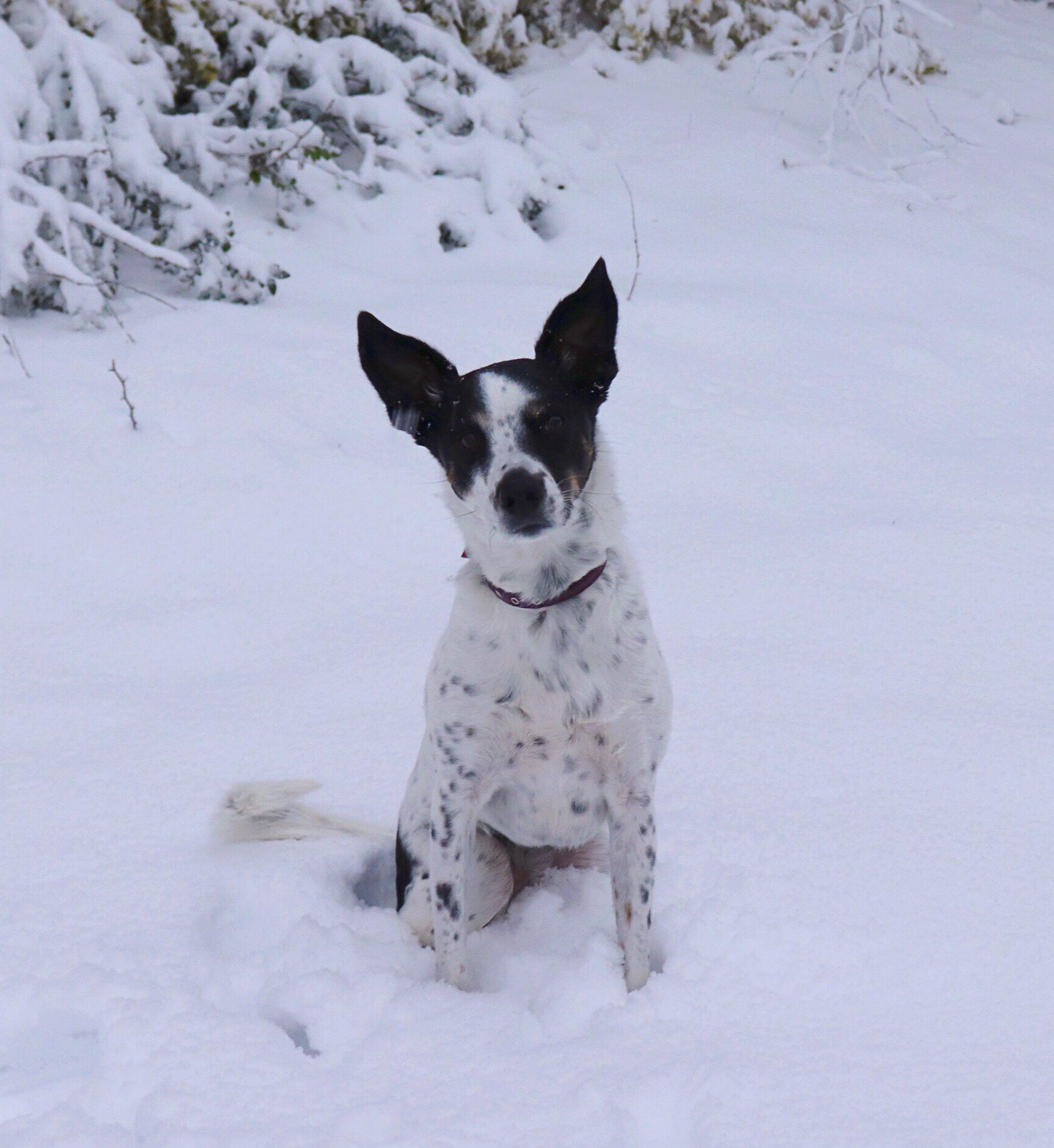 5 Activities to Keep Your Dog Busy and Prevent Boredom this Winter