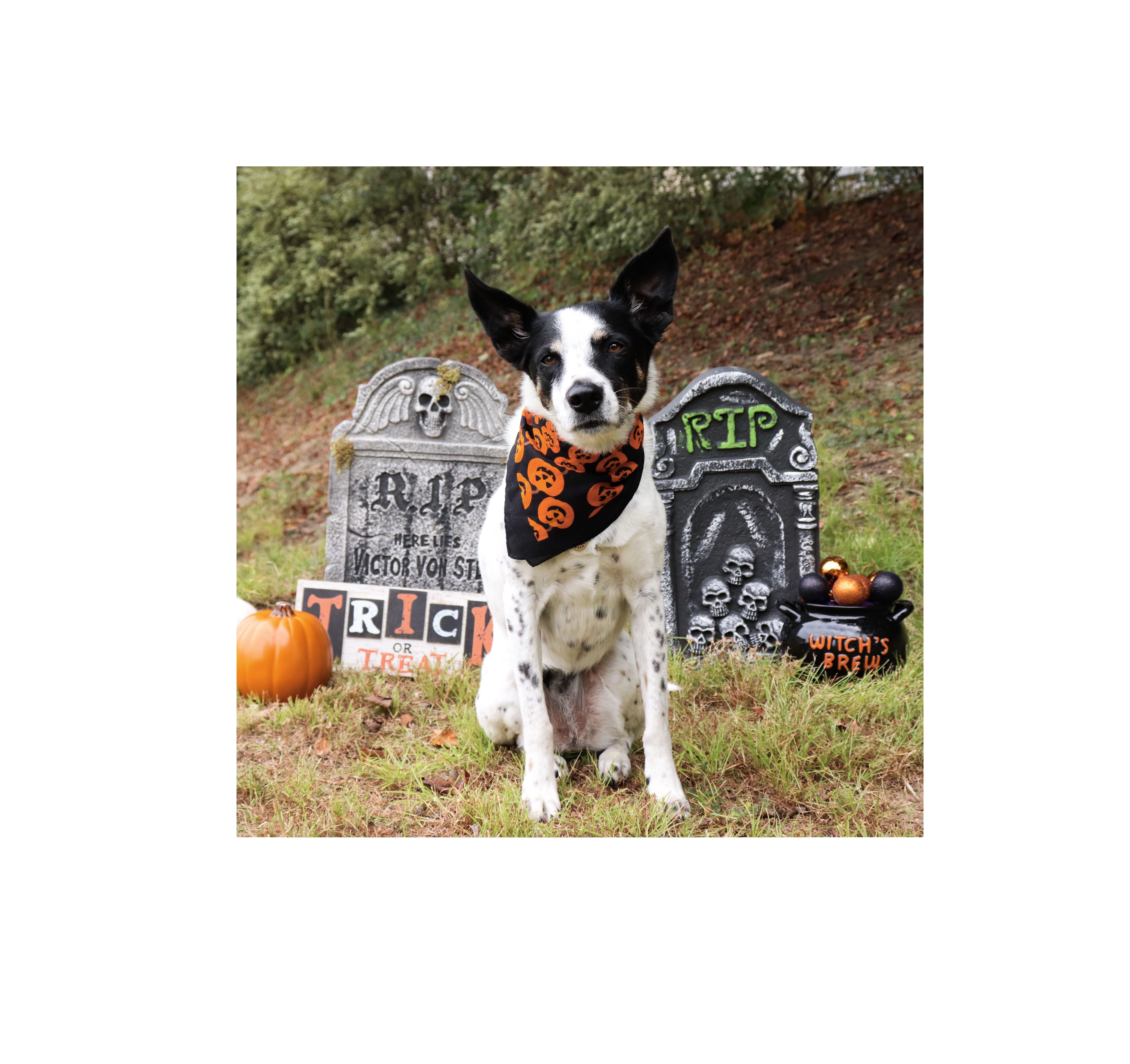 Have a Howlin' Halloween With These Dog Costume Ideas