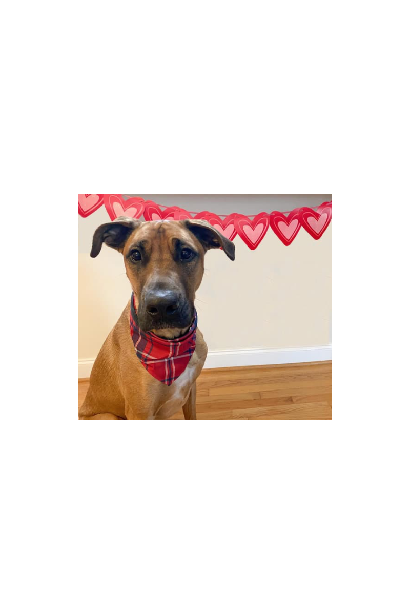 Must-Have Dog Gifts for Valentine's Day