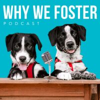 Why we foster podcast