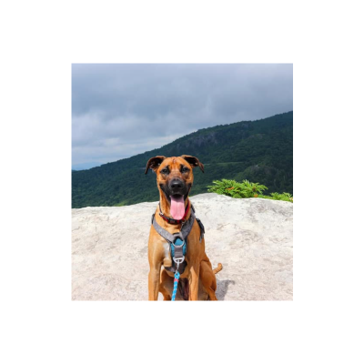 Pet-Friendly Guide to Boone